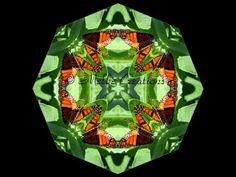 Melbe Creations Butterfly Mandala's  Something a little special for you to view!