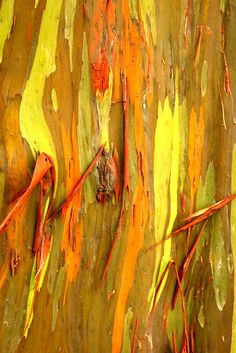 Bark of a tree with orange and yellow hughes
