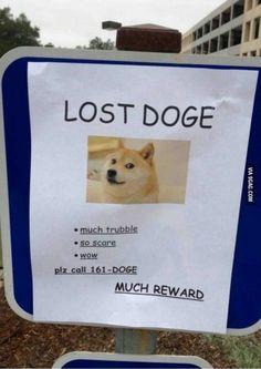 Much doge