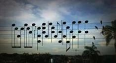 Video: Birds naturally station themselves as musical notes on electric wires so a guy decides to play it hear what it sounds like. So beautiful Karim Metwaly ~ Frequency