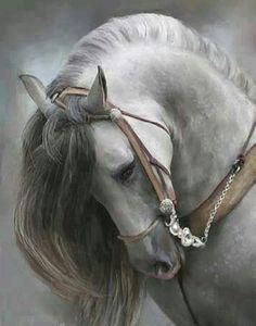 Majestic silvery grey horse