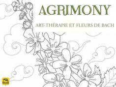 Afrimony ou aigremoine, une des 38 fleurs de Bach  #fleur #fleursdebach