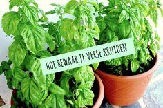 Koop jij ook wel eens verse kruiden in een bakje maar weet je niet goed hoe je ze moet bewaren als je de verpakking hebt geopend? Wij geven je een aantal tips hoe je verschillende kruiden het beste kunt bewaren. Peterselie, munt, koriander, bieslook, tijm, oregano enzovoort. Manier 1: Snijd de stengels schuin af. Doe...Lees Meer » Love Garden, Herb Garden, Vegetable Garden, Kitchen Herbs, Hoe, Blond Amsterdam, Fruits And Vegetables, Food Hacks, Wine Recipes
