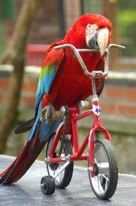 Blog About Training Parrots