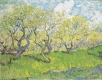Flowering Orchards (Van Gogh series) - Wikipedia, the free encyclopedia