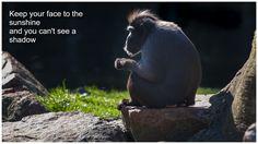 Photo taken at Rotterdam Zoo (Diergaarde Blijdorp) by arievantilborg.