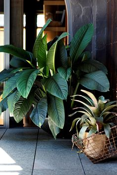 - Industrial-Style Urban Courtyard Healthy specimens include *Spathiphyllum* 'Sensation' (left) and a bromeliad, *Vriesea fosteriana*.Healthy specimens include *Spathiphyllum* 'Sensation' (left) and a bromeliad, *Vriesea fosteriana*. Garden Structures, Garden Paths, Garden Tools, Garden Ideas, Urban Garden Design, Home Vegetable Garden, Home And Garden, Interior Garden, Tropical Plants