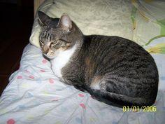 Photo by Bogdan Alexandru Mammals, Cats, Gatos, Kitty Cats, Cat, Kitty, Serval Cats, Kittens