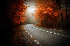 27 Exquisite Places To See Brilliant Fall Colors This Year Transylvania, Romania