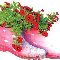 Kuidas kummikutes kasvavaid lilli hooldada?