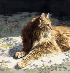 Lovely photo of long-haired cat / Sun Kissed  by Sueellen Ross Looks just like my Somali! Beautiful.