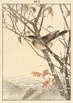 Imao Keinen : Taiwan Cherry, Mugimaki Flycatcher at Davidson Galleries Japanese Bird, Japanese Prints, Taiwan, Davidson Galleries, Oriental Flowers, Flower Bird, Botanical Drawings, Bird Drawings, Japanese Painting