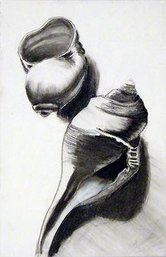 charcoal drawing of sea shells