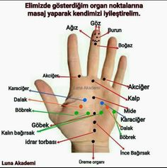 Gesundheit - - Another! Healthy Beauty, Health And Beauty, Healthy Life, Acupressure Points, Interesting Information, Cool Words, Health Tips, Herbalism, Health Fitness