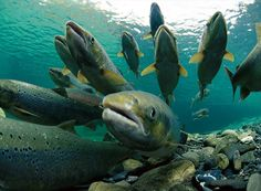 A group of fish is called a 'school' or a 'shoal.'