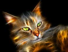 Blogateira: SUSPIROS DA GATEIRA: O Poder dos Gatos na Cura das...