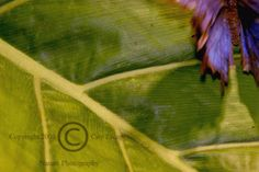 Limited Edition Nature Art Print. Flight of the Flutterby. Wildlife photograph:  Insects, Smithsonian, Washington, D.C., Butterfly, Insects