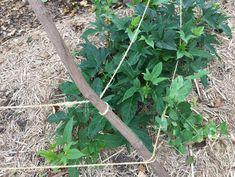 Marina's Garden Sneak Preview Plants, Garden Tools, Permaculture, Herbs, Garden