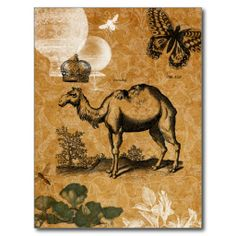 =>Sale on          Vintage Camel Postcard           Vintage Camel Postcard We provide you all shopping site and all informations in our go to store link. You will see low prices onDiscount Deals          Vintage Camel Postcard Review from Associated Store with this Deal...Cleck Hot Deals >>> http://www.zazzle.com/vintage_camel_postcard-239144362376179688?rf=238627982471231924&zbar=1&tc=terrest