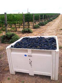 Doubleback Harvest 2013 #WAwine