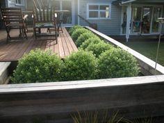 Kay Millar Landscape Design, West Auckland Landscaping Ideas, Garden Landscaping, Auckland, Landscape Design, Deck, Gardening, Google Search, Outdoor Decor, Home Decor