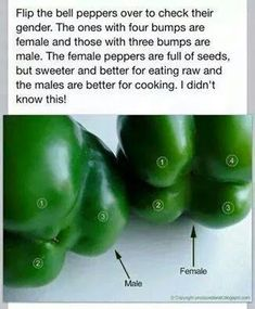 Green pepper adage.