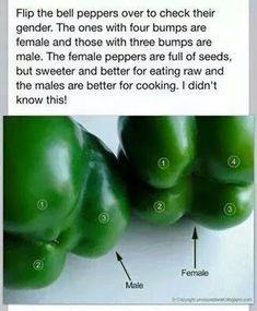 Green pepper adage.