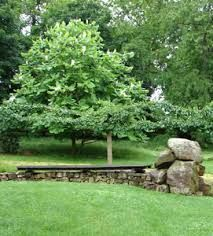 big leaf magnolia in the landscape photos Big Leaf Plants, Big Leaves, Landscape Photos, Magnolia, Stepping Stones, Bloom, Outdoor Decor, Image, Stair Risers