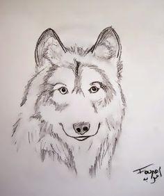 ANIMAL - SOCIO - RIFY ART