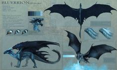 Bluerrion new reference sheet by Allagar dragon c+ Mythical Creatures Art, Mythological Creatures, Magical Creatures, Creature Concept Art, Creature Design, Science Fiction Games, Science Experiments, Fantasy Beasts, Dragon Artwork