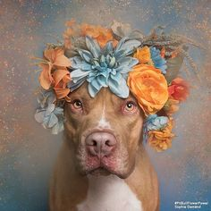 Flower Power (Dexter) by Sophie Gamand