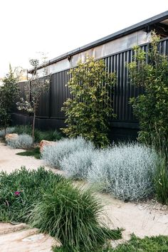 A simply beautiful contemporary Australian native Garden done so well. Garden design Plants supplied by A simply beautiful contemporary Australian native Garden done so well. Garden design Plants supplied by garden inspiration Australian Garden Design, Australian Native Garden, Contemporary Garden Design, Landscape Design, Farm Gardens, Outdoor Gardens, Native Gardens, Coastal Gardens, Landscaping Plants