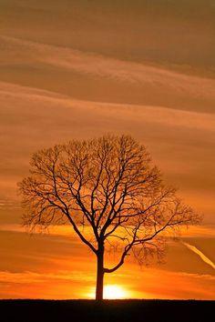 sale el sol detrás de un árbol en Australia!