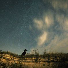 Dog and a starry sky