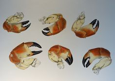 study sheet of crab claws