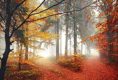 Autumn by Kilian Schönberger