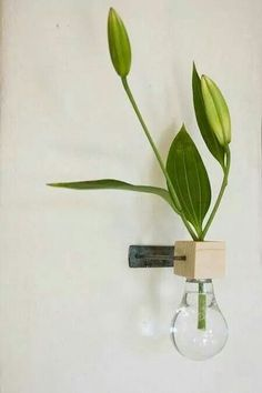 Wall hanging vase Recycling lightbulbs