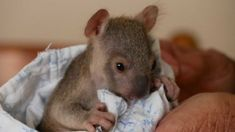 24 Hours A Day, Feel Good News, Uplifting News, Good News Stories, Positive News, Pixie, Pouch, Car, Medical