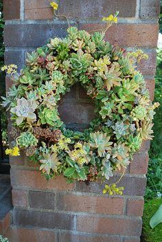 I want to make a Hens & Chicks wreath!