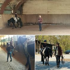 Solo lesson today ... pal E was stuck in traffic #vaulting #reitsport #reitschuleadamstal #reitpony #equestrianvaulting