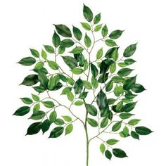 See us for your silk plants!