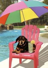 """featuring the singing dachshund, Lucy Lou. Inside message: """"Paws and relax. Feel better soon. Musical Cards, Black And Tan Dachshund, Get Well Cards, Weiner Dogs, Feel Better, Musicals, Singing, Greeting Cards, Hilarious"""