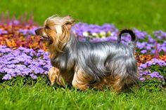 Маленькие собачки: породы, описание, фото  Смотри больше http://kot-pes.com/malenkie-sobachki-porody-opisanie-foto/
