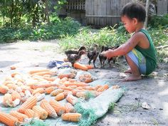 Philippines - practicing organic farming to improve incomes and harvests