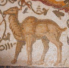 Roman Mosaic. Camel. Tunis, Tunisia.
