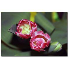"""Trademark Fine Art Martha Guerra 'A Pair of Tulips II' 16"""" x 24"""" Canvas Art"""