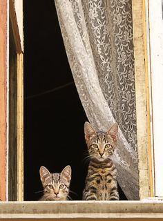 Sunday Afternoon ~ Two Tabby Cats . Pretty Cats, Beautiful Cats, Animals Beautiful, Cute Animals, Cute Kittens, Cats And Kittens, Tabby Cats, Cool Cats, Animal Gato