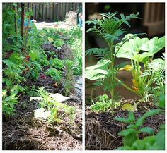 A Beginner's Guide to Straw Bale Gardening