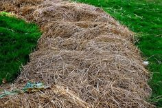 Så får du nya odlingsbäddar utan att gräva! | Land Bokashi, Growing Greens, Go Green, Garden Plants, Gardening Tips, Grass, Garden Design, Land, Outdoor