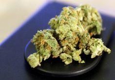 Bundesverwaltungsgericht: Schmerzpatient darf Cannabis anbauen - http://www.statusquo-news.de/bundesverwaltungsgericht-schmerzpatient-darf-cannabis-anbauen/